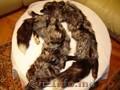 Vand vulpi argintii canadiene intregi, nurci maro si negre, gulere, toca etc.
